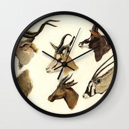 african antelopes Wall Clock