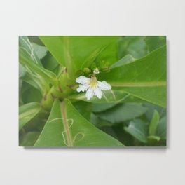 Beach Lettuce Bloom Metal Print