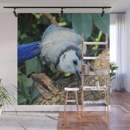Blue Jay bird Wall Mural