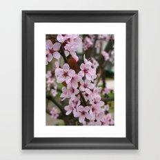 Cherry Plum Blossoms Framed Art Print
