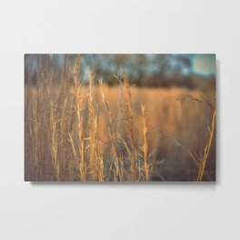 Evening Field Metal Print