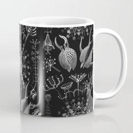 Ernst Haeckel - Phaeodaria Coffee Mug