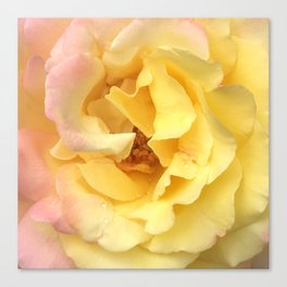 Summer Rose in Pink and Yellow Canvas Print