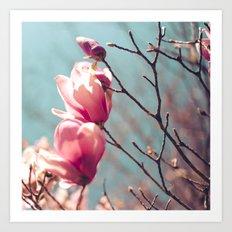 japanese magnolias Art Print