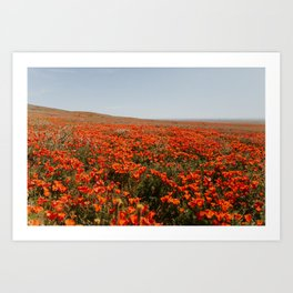 California Super Bloom Art Print
