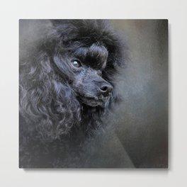 Snack Spotter - Black Toy Poodle Metal Print
