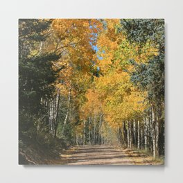 Fall Road, Colorado Metal Print