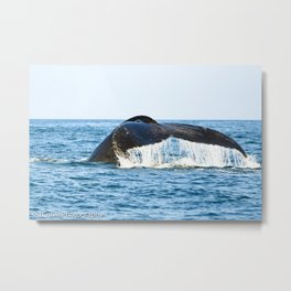 A Whales Tale Metal Print