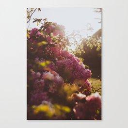 Wild Flowers - A Summer Evening Canvas Print