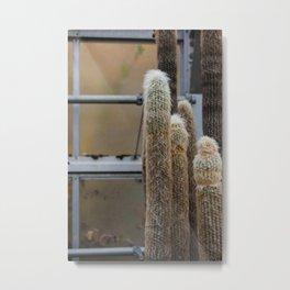 Furry Cactus Metal Print
