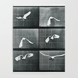 Time Lapse Motion Study Bird Monochrome Poster