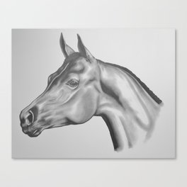 Show Horse in Pencil Canvas Print