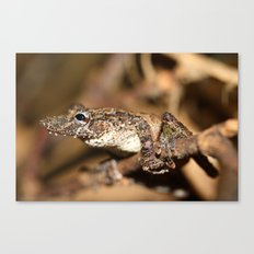 Camouflage Frog Canvas Print