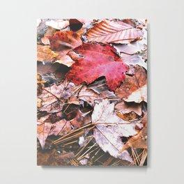 Brisk Autumn  Metal Print