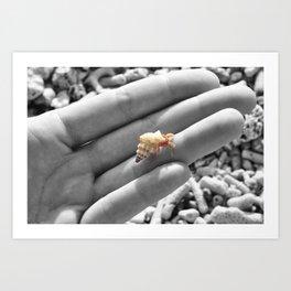 I caught myself a baby hermit crab... Art Print