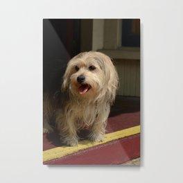Storefront Dog Metal Print