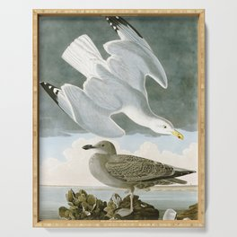 Seagulls Illustration - Birds in America Serving Tray