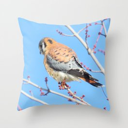 American Kestrel (Sparrowhawk) 13 Throw Pillow