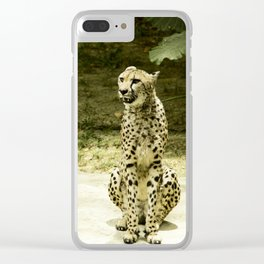 Cheetah in the Sun Clear iPhone Case