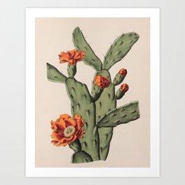 Botanical Cactus Art Print