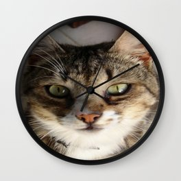 Tabby Cat Kitten Giving Eye Contact Wall Clock