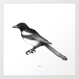 Magpie (Pica pica) - balck and white Art Print