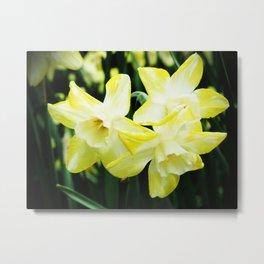 Daffodil family Metal Print