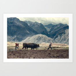Sharecroppers plowing a field for potatoes, Maras, Urubamba Valley, Peru Art Print
