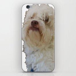 Grumpy Terrier Dog Face iPhone Skin