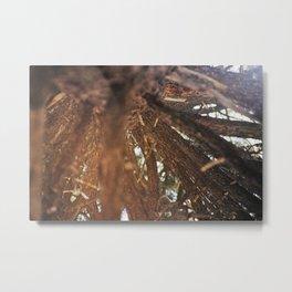 Never Stop Looking Up (Tree 1 detail) Metal Print