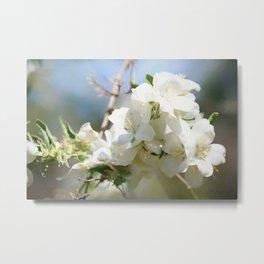 White Hawthorn Flowers Metal Print