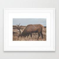 elk Framed Art Prints featuring Elk by Luke Gram