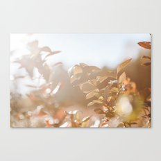autumn on plantation Canvas Print