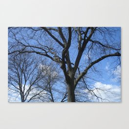 After Winter Trees Canvas Print