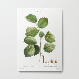 Hazelnut (Corylus avellana + Coudrier noisettier) from Traité des Arbres et Arbustes que l'on cultiv Metal Print