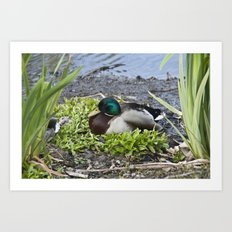 Quack goes the Duck Art Print
