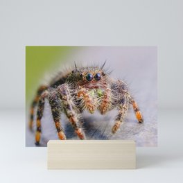 Springtime Jumping Spider Macro Photograph Mini Art Print