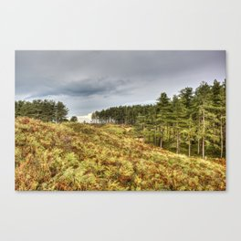Whiteford Burrows Nature Reserve Canvas Print