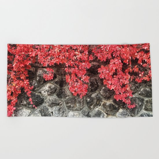 Red ivy leaves autumn stone wall Beach Towel