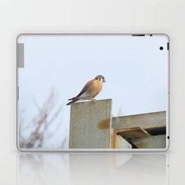Sparrowhawk (Kestrel) Steel Span 11 Laptop & iPad Skin