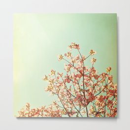 Turquoise Orange Nature Photography, Mint Teal Peach Dogwood Tree Photograph, Coral Floral Metal Print