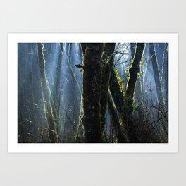 Pixie Forest Art Print