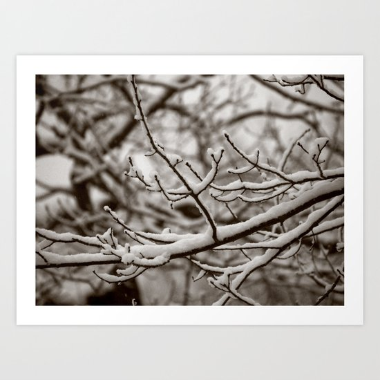Wintry Spring Art Print