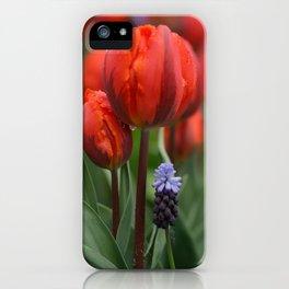 We Belong Together, Holland Tulips by Karen Images iPhone Case