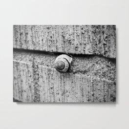 The snail Metal Print