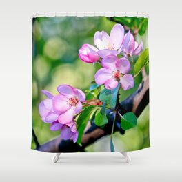 Bunch of pink crabapple flowers on a tree. Green background Shower Curtain