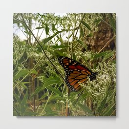 Feeding butterfly Metal Print