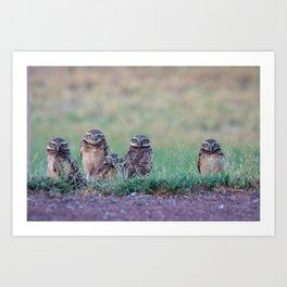 Baby Burrowing Owls Art Print