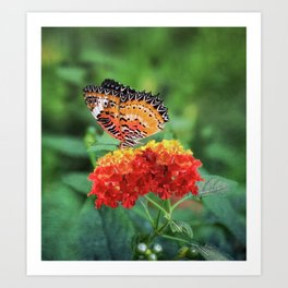 Spring butterfly on flowers in countryside Art Print