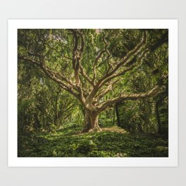 Spirits inside the wood Art Print